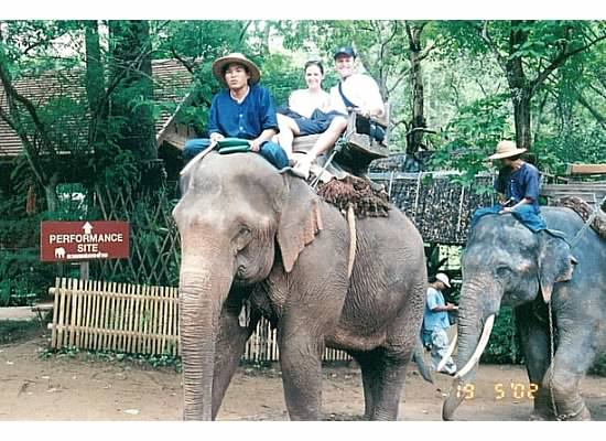 The Elephant Conservatory in Chaing Mai Thailand