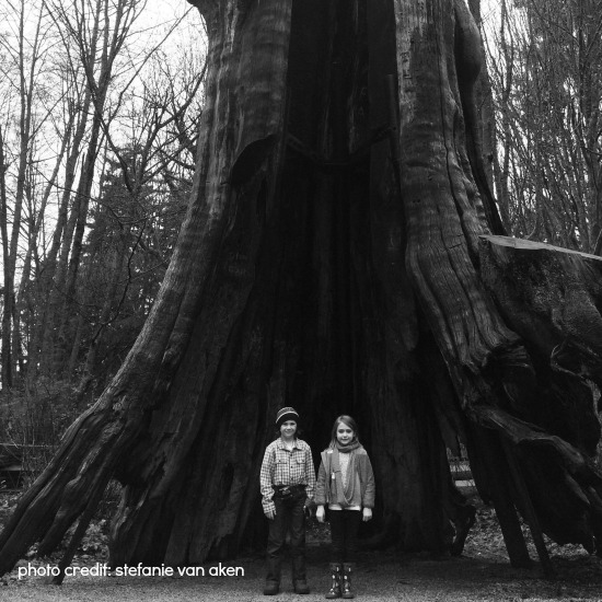 Hollow Tree Vancouver